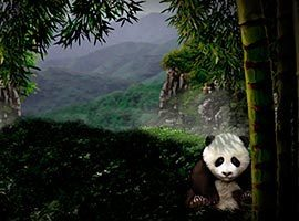 71.-Untamed-Giant-Panda