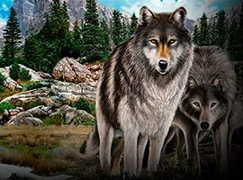Untamed-Wolf-Pack