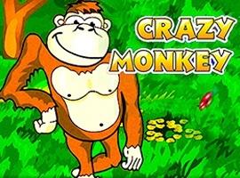 Crazy-Мonkey